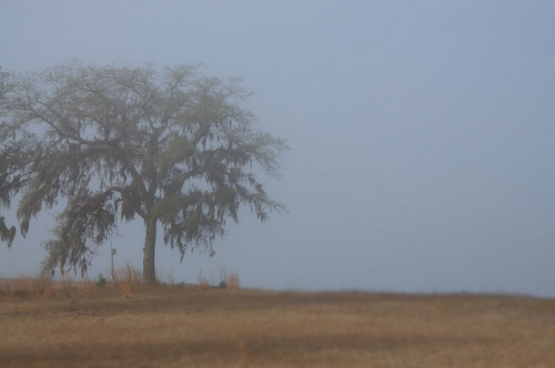 Oak in Fog on Cliffs of Crooked River Surreal Magical Photograph Copyright Brian Brown Vanishing South Georgia USA 2014
