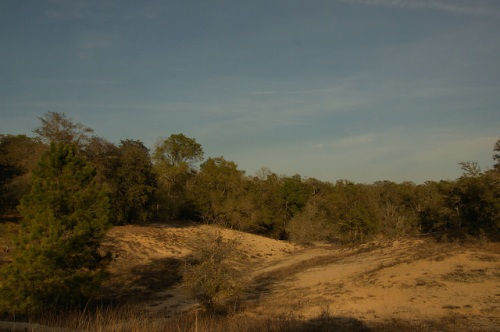 Alapaha River Sand Dunes Scrublands Fragile Ecosystem Irwin County GA Photograph Copyright Brian Brown Vanishing South Georgia USA 2014