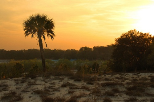 Crystal Lake Irwin County GA Sunset Palm Tree Dry Lakebed Local Landmark Attraction Photograph Copyright Brian Brown Vanishing South Georgia USA 2014