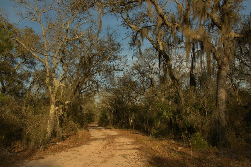 Dirt Road Alapaha River Scrublands Floodplain Irwin County GA Photograph Copyright Brian Brown Vanishing South Georgia USA 2014