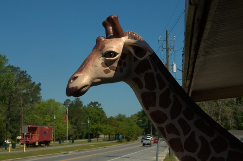 Georgia Highway 17 Antique Store Giraffe Old Caboose Guyton GA Effingham County Photograph Copyright Brian Brown Vanishing South Georgia USA 2014