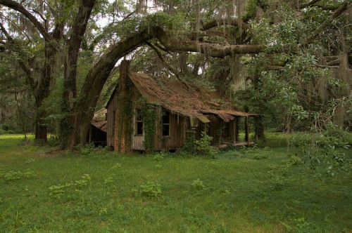 Board and Batten Farmhouse Under Ancient Live Oak Toombs County GA Photograph Copyright Brian Brown Vanishing South Georgia USA 2014