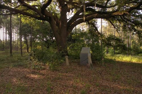 Irwin County GA Revolutionary War Griffin Bradford Monument Oak Tree Photograph Copyright Brian Brown Vanishing South Georgia USA 2014