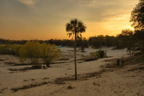 Crystal Lake GA Irwin County Dry Lakebed Far Side Palm Tree Sunset Photograph Copyright Brian Brown Vanishing South Georgia USA 2014