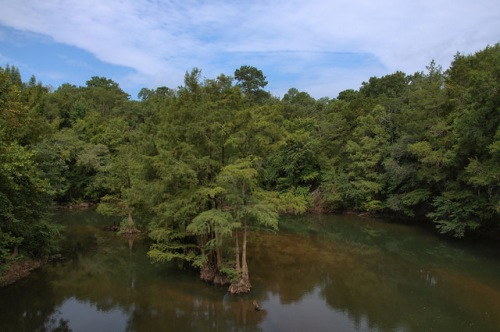 Ichawaynochaway Creek at Woodruff Plantation Mitchell County GA Photograph Copyright Brian Brown Vanishing South Georgia USA 2014