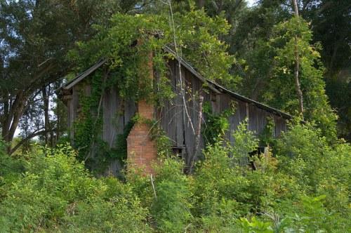 Mitchell County GA Tenant Farmhouse Overgrown Abandoned Rural South Photograph Copyright Brian Brown Vanishing South Georgia USA 2014