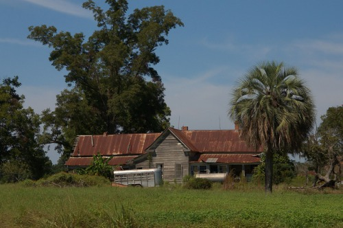 Cook County GA Farmhouse Morrison Creek Road Unpainte Palm Tree Southern Decay Photograph Copyright Brian Brown Vanishing South Georgia USA 201