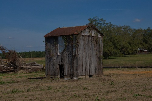 Chula GA TIft County Old Tobacco Barn Photograph Copyright Brian Brown Vanishing South Georgia USA 2014