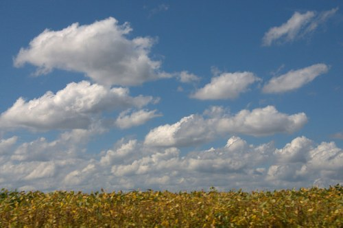Durdenville GA Emanuel County Soybean Field Fall Clouds Photograph Copyright Brian Brown Vanishing South Georgia USA 2014