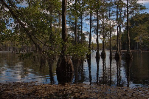 George L Smith State Park Cypress Trees Mill Pond Emanuel County GA Photograph Copyright Brian Brown Vanishing South Georgia USA 2014