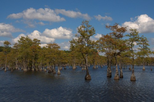 George L Smith State Park Emanuel County GA Parrish Millpond Cypress Trees Photograph Copyright Brian Brown Vanishing South Georgia USA 2014