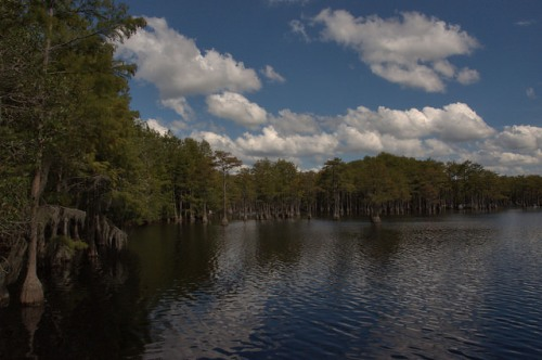 George L Smith State Park Emanuel County Mill Pond Cypress Trees Photograph Copyright Brian Brown Vanishing South Georgia USA 2014