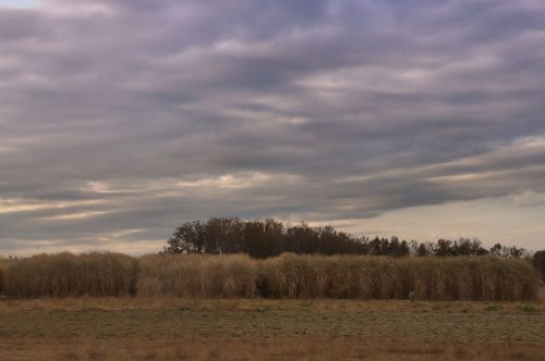 Burke County GA Countryside Field Grasses November Clouds Photograph Copyright Brian Brown Vanishing South Georgia USA 2014