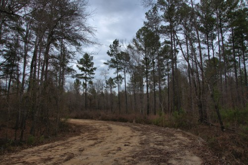 Montgomery Lake Telfair County GA Dirt Road Ocmulgee River Photograph Copyright Brian Brown Vanishing South Georgia USA 20154