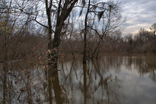 Montgomery Lake Telfair County GA In Ocmulgee RIver WInter High Water World Record Bass Official George Perry Photograph Copyright Brian Brown Vanishing South Georgia USA 2015