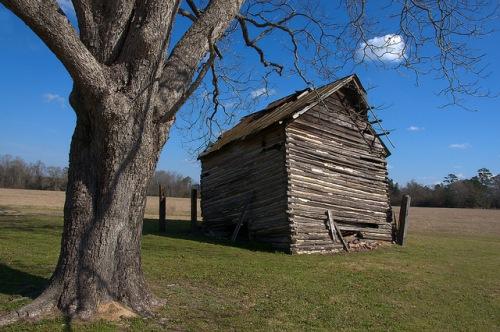 Tattnall County GA Adamsons Split Collapsing Log Tobacco Barn Photograph Copyright Brian Brown Vanishing South Georgia USA 2015