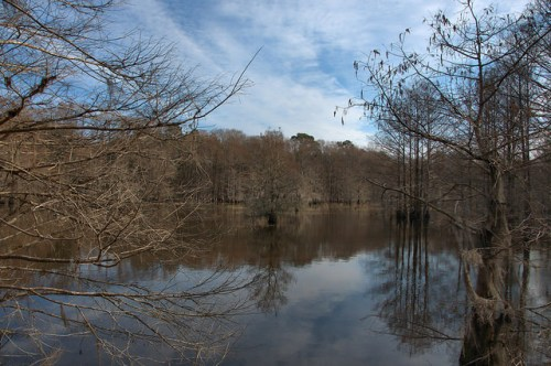 Davis Mill Pond Worth County GA Jordan Company Lake Photograph Copyright Brian Brown Vanishing South Georgia USA 2015