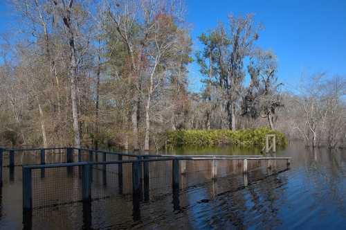 Suwannee River High Water at Visitors Center Fargo GA Photograph Copyright Brian Brown Vanishing South Georgia USA 2015