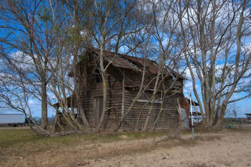 Tattnall County GA Barn Chinaberry Trees L P Conley Road Photograph Copyright Brian Brown Vanishing South Georgia USA 2015