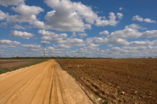 Tattnall County GA Dirt Road Photograph Copyright Brian Brown Vanishing South Georgia USA 2015