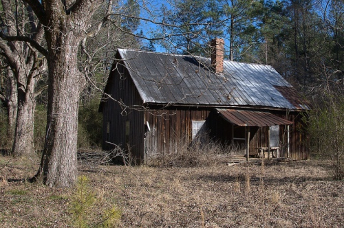 Washington Count GA Old Hunting Cabin Pecan Trees Photograph Copyright Brian Brown Vanishing South Georgia USA 2015