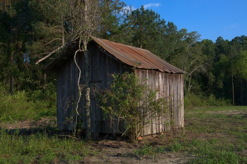 Ben Hill County GA Williams Farm Corn Crib or Shed Pine Level Community Photograph Copyright Brian Brown Vanishing South Georgia USA 2015