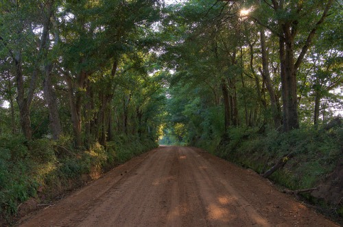 Dirt Road Canopy Sunset Irwin County GA Photograph Copyright Brian Brown Vanishing South Georgia USA 2015
