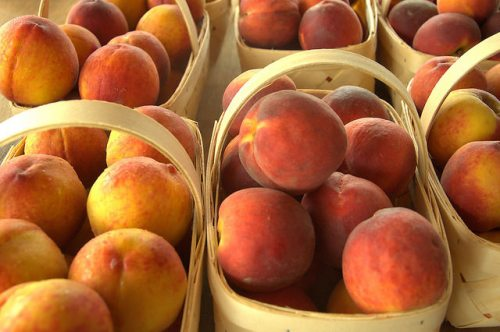Dickey Farms Peaches Musella GA June Prince Photograph Copyright Brian Brown Vanishing South Georgia USA 2015