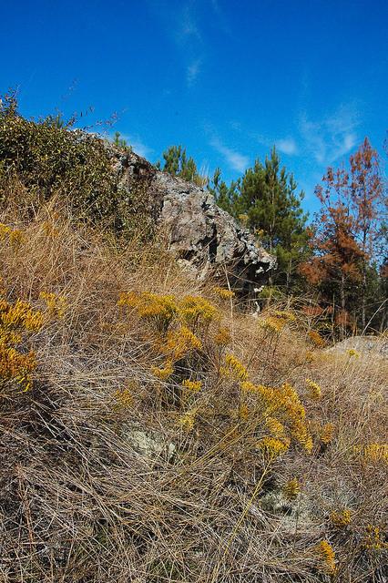 Altamaha Grit Sandstone Outcrop Middle Miocene Flat Tub Wildflowers Jeff Davis County GA Photograph Copyright Brian Brown Vanishing South Georgia USA 2015