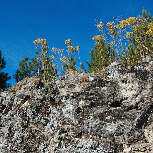 Flat Tub Altamaha Grit Sandstone Outcrop Middle Miocene Wildflowers Jeff Davis County GA Natural Area Photograph Copyright Brian Brown Vanishing South Georgia USA 2015