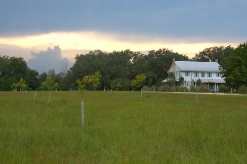 Horne Farm House Long County GA Viewed Across Young Pecan Orchard Photograph Copyright Brian Brown Vanishing South Georgia USA 2015