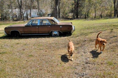 Abandoned Plymouth Valiant Mystic GA Yard Dogs Photograph Copyright Brian Brown Vanishing South Georgia USA 2015