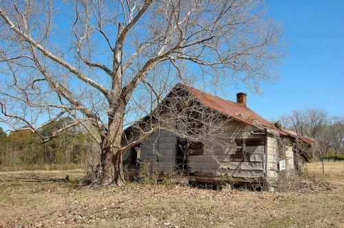Alamo GA Wheeler County Tenant Farm House Demolished Tar Paper Photograph Copyright Brian Brown Vanishing South Georgia USA 2015