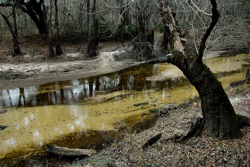 withlacoochee-river-ga-lowndes-county-pristine-natural-area-threatened-by-overpopulation-small-river-ecosystem-photograph-copyright-brian-brown-vanishing-south-georgia-usa-2015