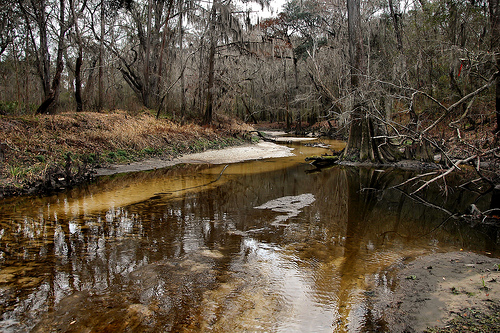 withlacoochee-river-ga-lowndes-county-urban-development-threatens-this-pristine-blackwater-ecosystem-photograph-copryight-brian-brown-vanishing-south-georgia-usa-2015