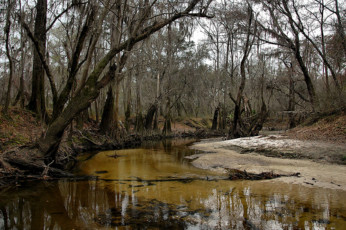withlacoochee-river-ga-lowndes-county-valdosta-threatened-by-urban-growth-photograph-copyright-brian-brown-vanishing-south-georgia-usa-2015