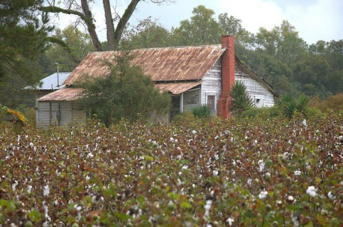Barwick GA Brooks County Tenant Farmhouse in Cotton Field Photograph Copyright Brian Brown Vanishing South Georgia USA 2015