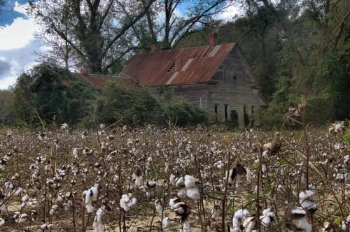 Farmhouse in Cotton Field Tattnall County GA Photograph Copyright Brian Brown Vanishing South Georgia USA 2015