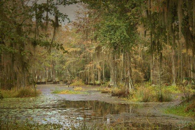 Popes Millpond Barwick GA Brooks County Photograph Copyright Brian Brown Vanishing South Georgia USA 2015