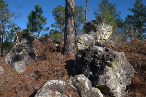 Reubin Lake Ben Hill County GA Altamaha Formation Rocks Photograph Copyright Brian Brown Vanishing South Georgia USA 2015