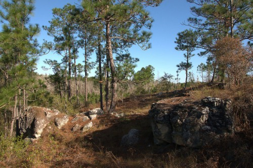 Reubin Lake Rock Formations Ben Hill County GA Photograph Copyright Brian Brown Vanishing South Georgia USA 2015