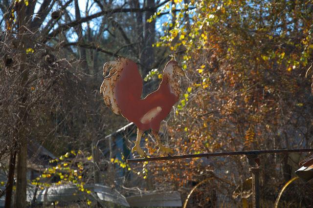 Bacon County GA Folk Art Rooster Photograph Copyright Brian Brown Vanishing South Georgia USA 2015