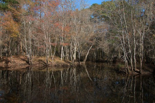 Gar Lake Seventeen Mile River Coffee County GA Photograph Copyright Brian Brown Vanishing South Georgia USA 2015