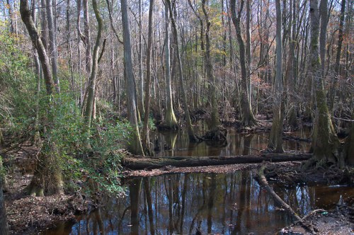 Seventeen 17 Mile River Coffee County GA Mixed Hardwood Swamp Photograph Copyright Brian Brown Vanishing South Georgia USA 2015