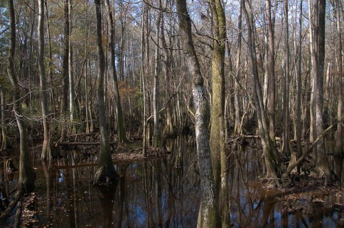 Seventeen 17 Mile River Ephemeral Photograph Copyright Brian Brown Vanishing South Georgia USA 2015