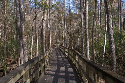 Seventeen Mile River Boardwalk General Coffee State Park Photograph Copyright Brian Brown Vanishing South Georgia USA 2015