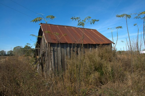 Tattnall County GA Board and Batten Farm Structure Photograph Copyright Brian Brown Vanishing South Georgia USA 2015
