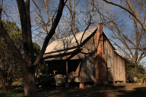 Tattnall County GA Board and Batten Farmhouse Pecan Trees Photograph Copyright Brian Brown Vanishing South Georgia USA 2015