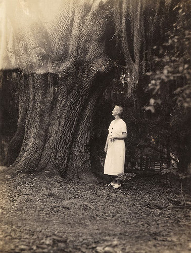 Bird Descendant Looking at one of the old oaks at Glen Echo Plantation Bryan County GA Photograph Courtesy Kenneth Dillon Dixon