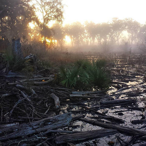 Morgan Lake Altamaha River Long County GA Sunrise Fog Logged Out Photograph Copyright Brian Brown Vanishing South Georgia USA 2015